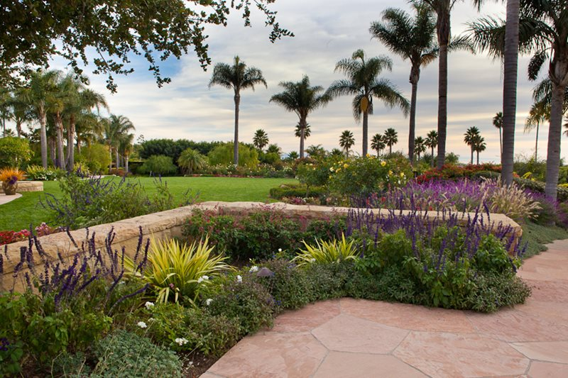 Stone Wall, Blooming Plants, Palm Trees Garden Design Down To Earth  Landscapes Santa Barbara