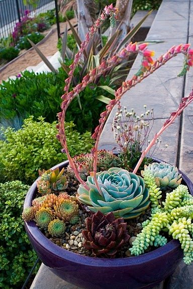 Container Garden Design garden design - san diego, ca - photo gallery - landscaping network