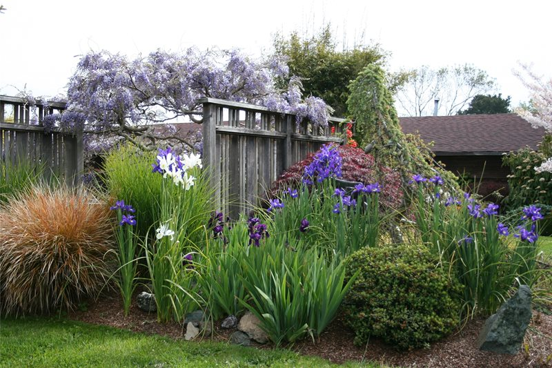 Fence Screens Gates and Fencing Genevieve Schmidt Landscape Design and Fine Maintenance Arcata, CA