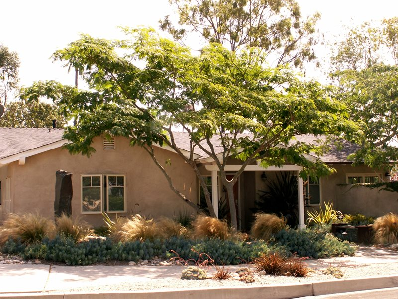 Front Yard With Plants And Tree Lawnless Landscaping Grace Design Associates Santa Barbara, CA