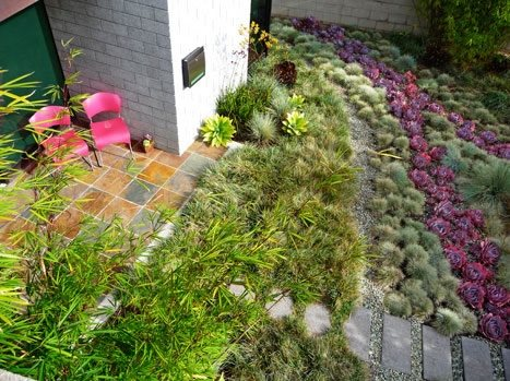Grasses Succulents Lawnless Landscaping Kiesel Design Ventura, CA