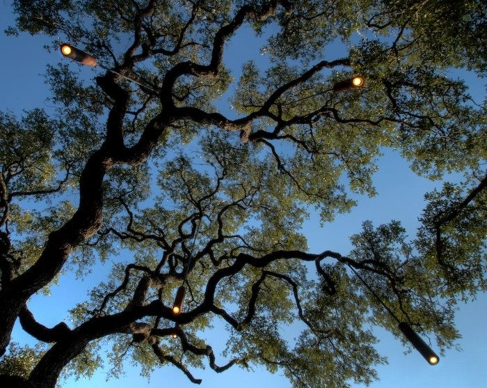 Tree Lighting Lighting D-Crain Austin, TX