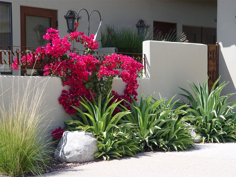Heat Loving Plants Mediterranean Landscaping Maureen Gilmer Morongo Valley, CA