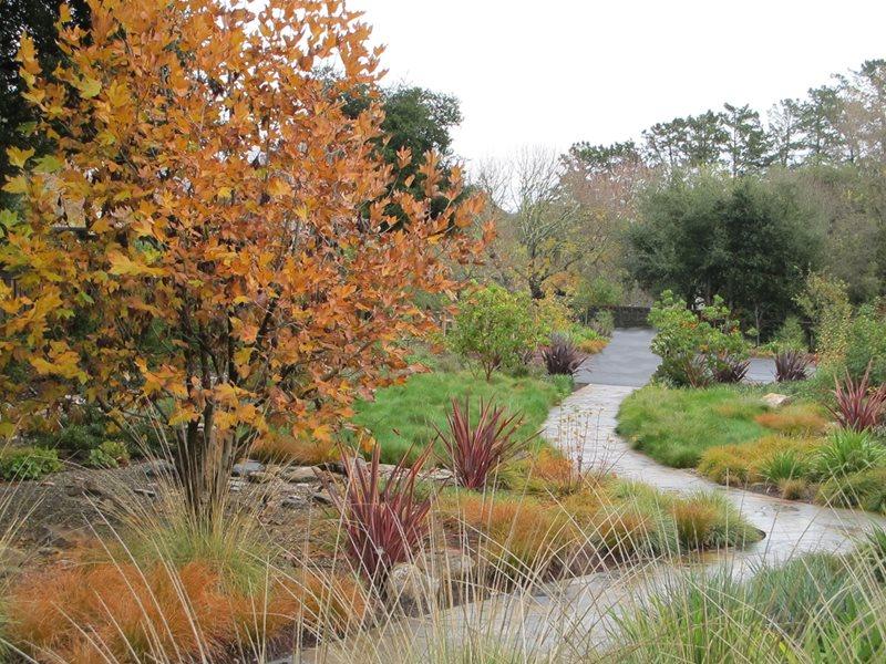 Meadow Garden Mediterranean Landscaping Suzanne Arca Design Albany, CA
