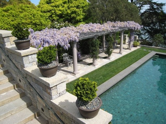 Mediterranean Pergola, Pergola Plants Pergola and Patio Cover Suzman Design Associates San Francisco, CA