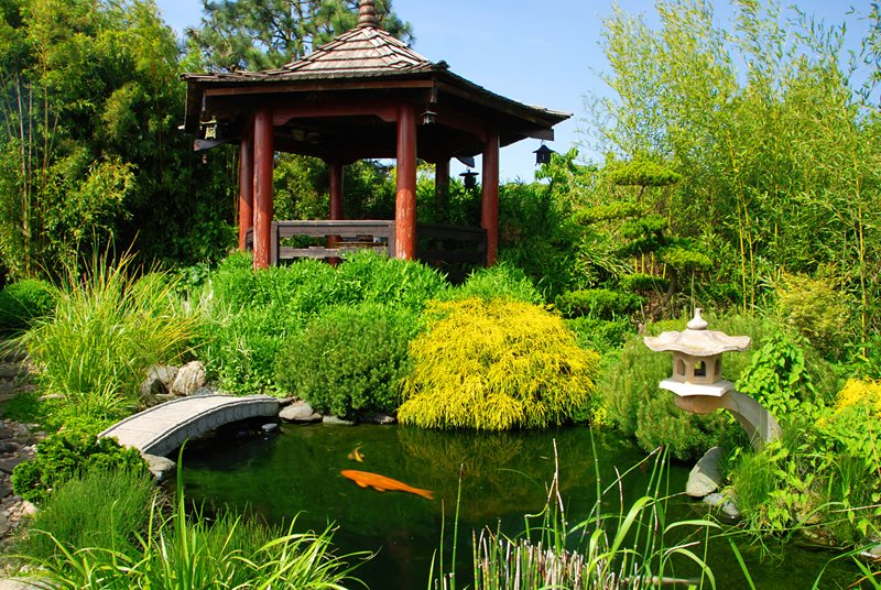 Asian Koi Pond Pond and Waterfall Landscaping Network Calimesa, CA