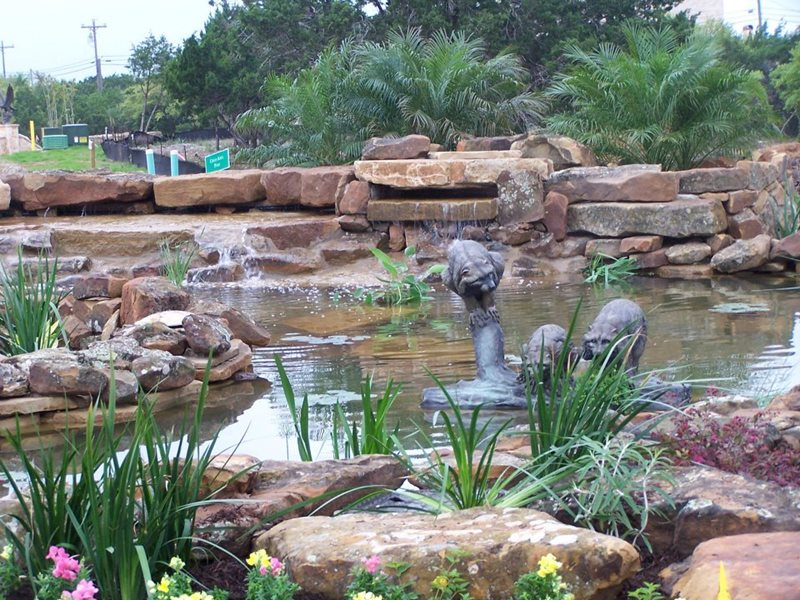 Backyard Pond, Racoon Sculpture Pond and Waterfall GreenScapes Landscaping and Pools Austin, TX