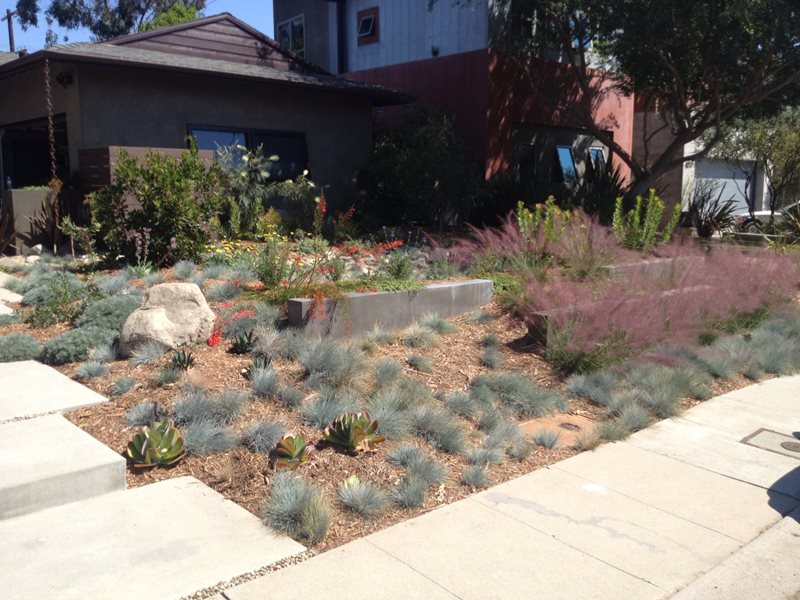 Drought Resistant Front Yard Landscape Xeriscape Landscaping Stout Design Build Los Angeles, CA