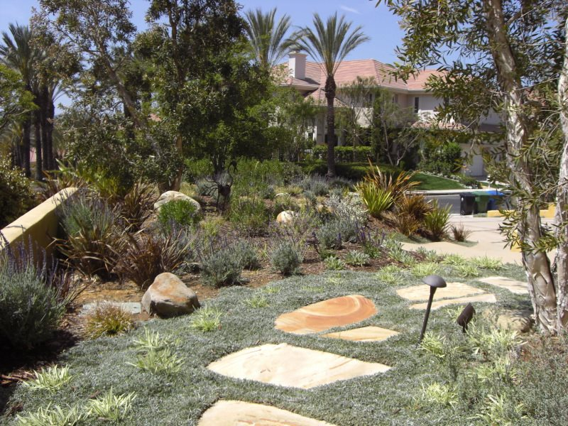 Drought Tolerant Groundcover Xeriscape Landscaping Stout Design Build Los Angeles, CA