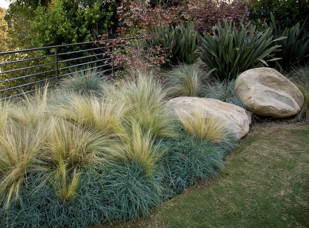 Xeriscape landscaping los angeles ca photo gallery for Garden design ornamental grasses
