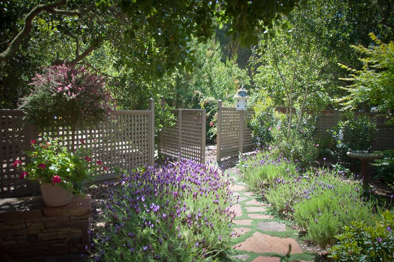 Lattice Fence, Lavender Blooms Xeriscape Landscaping Ecotones Landscapes Cambria, CA