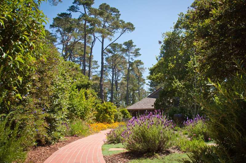 Red Brick Walkway, Blooming Lavender Xeriscape Landscaping Ecotones Landscapes Cambria, CA