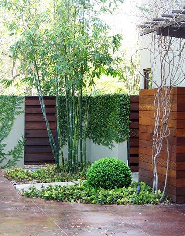 bamboo boxwood decor and accessory david wilson garden design austin tx