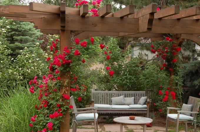 Landscape design problems and solutions landscaping network for Rose landscape design