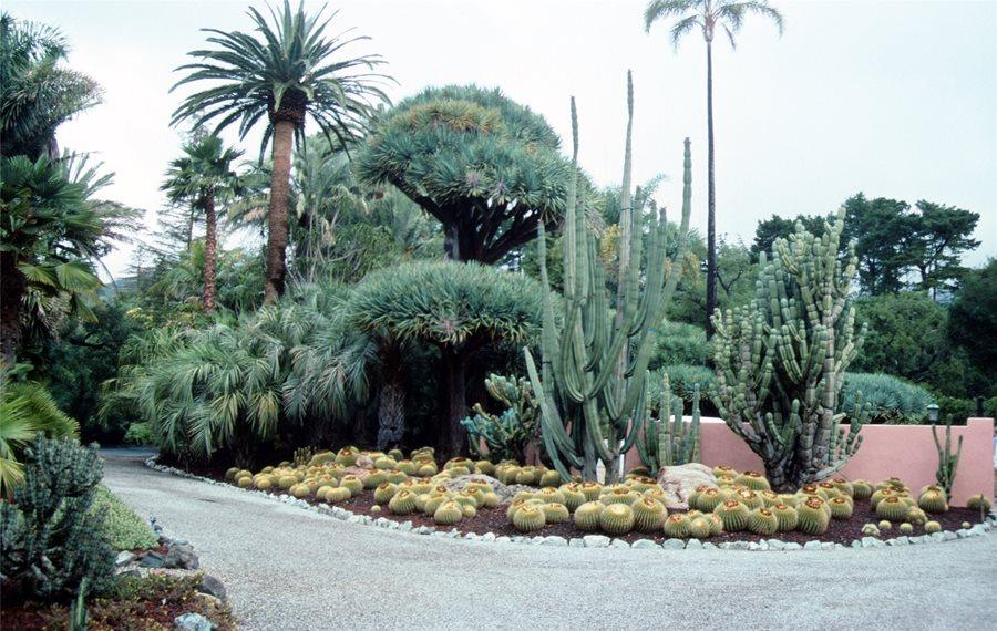 Succulents, Driveway, Barrel Cactus Pergola And Patio Cover Maureen Gilmer  Morongo Valley, CA