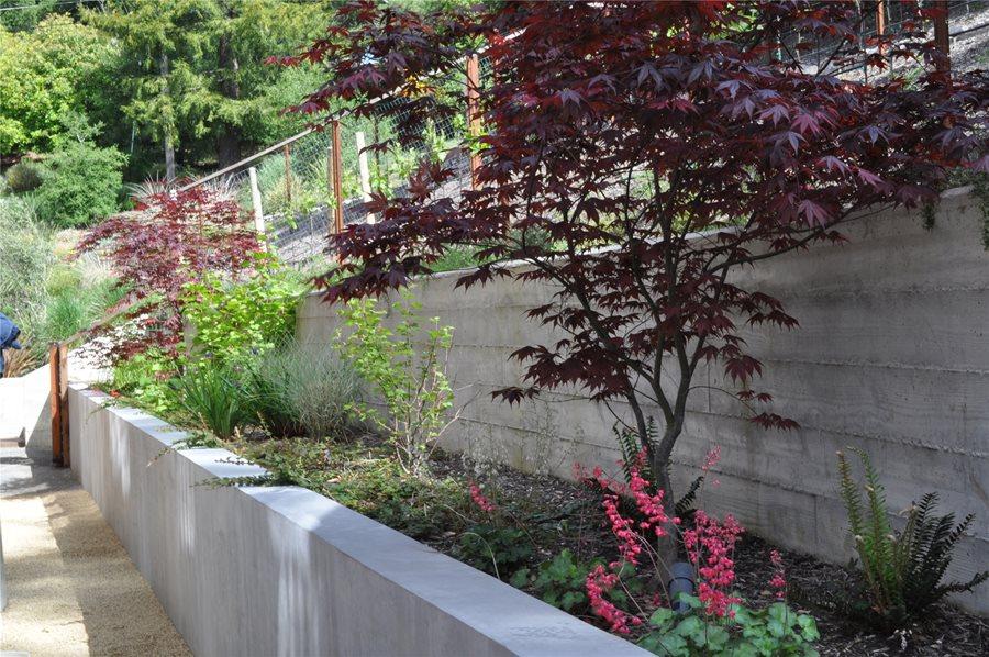 side yard seat wall retaining and landscape wall huettl landscape architecture walnut creek ca