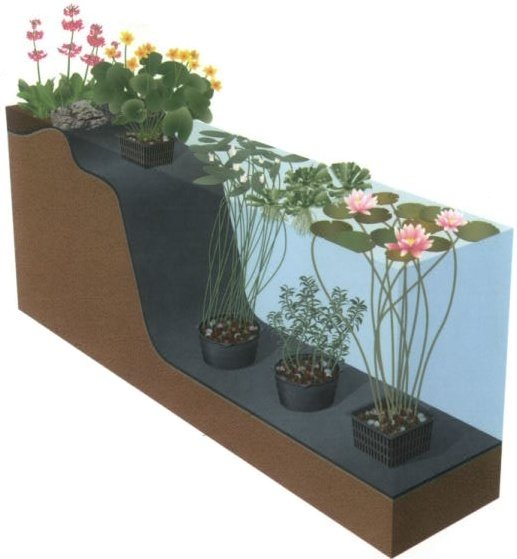 Aquatic pond plants landscaping network for Pond plant supplies
