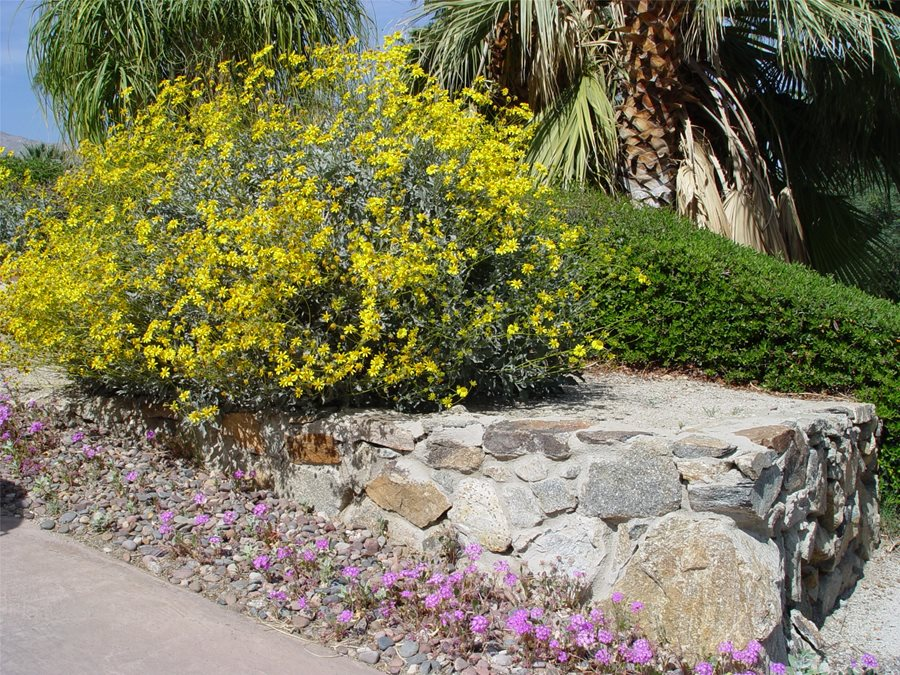 Driveway Landscaping Landscaping Network