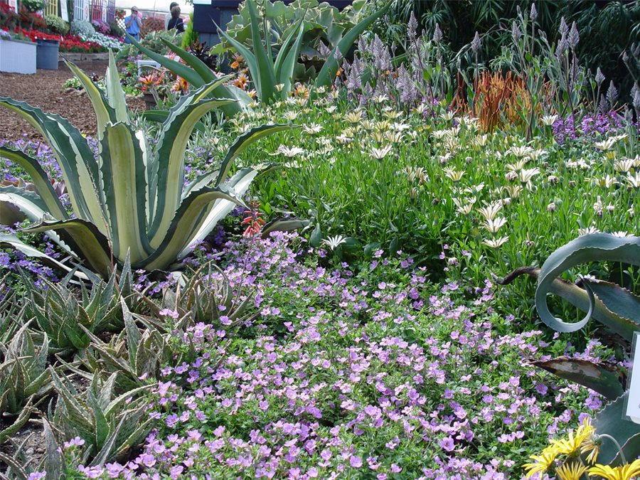groundcovers for slope maureen gilmer morongo valley ca - Garden Design Slope