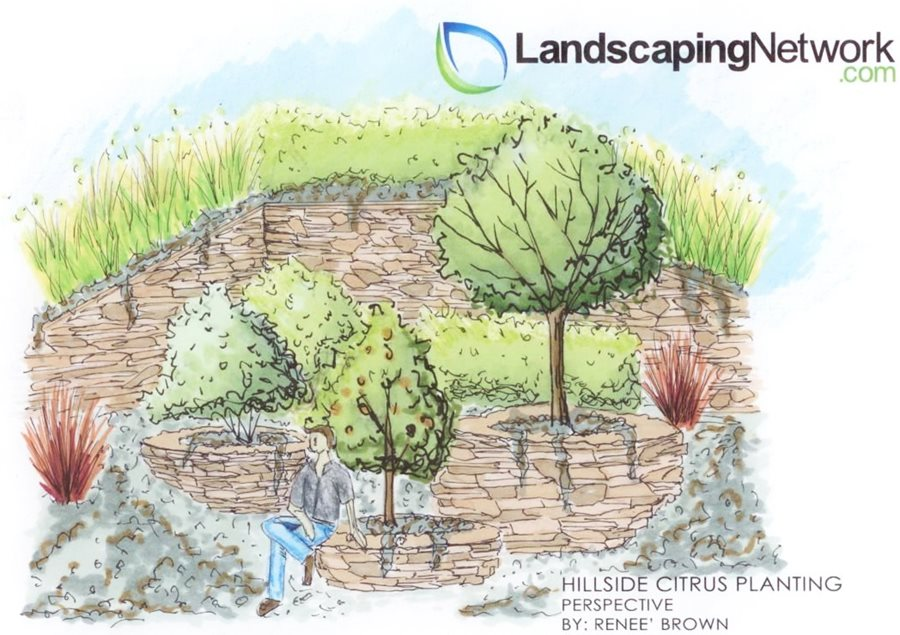 Hillside landscaping ideas solutions for slopes for Landscape drawing ideas
