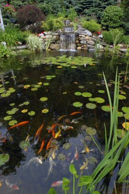 Koi Pond Design Maintenance Landscaping Network
