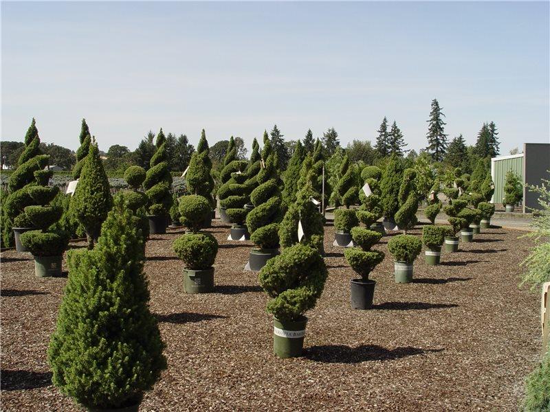 Landscape Cost Saving Money Landscaping Network