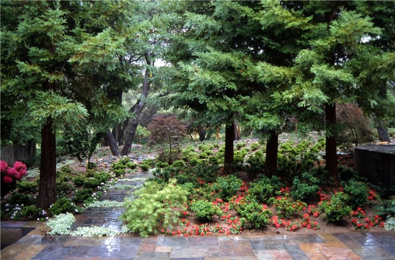 Shade Shrubs And Bushes Landscaping Network