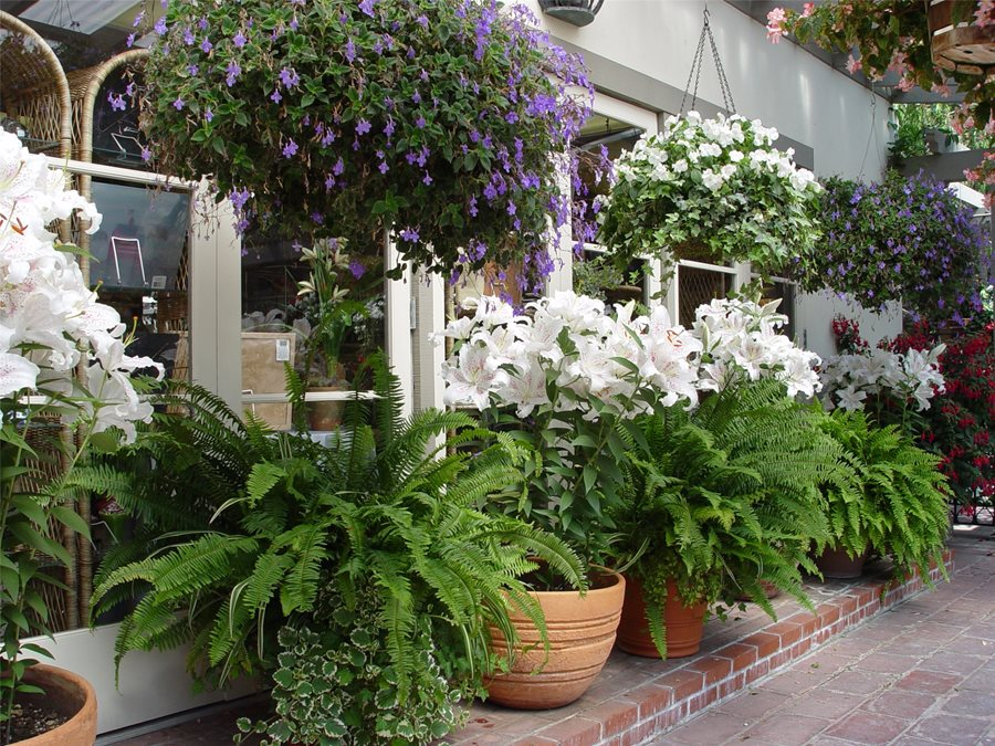 patio landscaping - landscaping network - Patio Flower Ideas