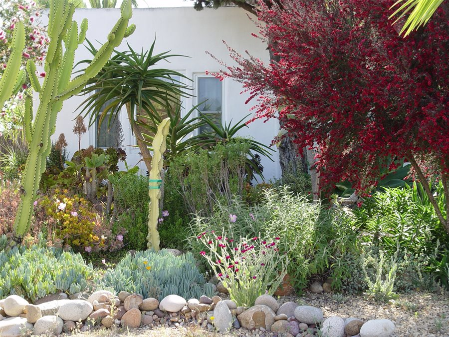 A Guide to Xeriscape Fundamentals - Landscaping Network on backyard arizona ideas, backyard butterfly garden ideas, backyard sod ideas, backyard planting ideas, backyard patio ideas, backyard zen ideas, backyard spring ideas, backyard wood ideas, backyard plants ideas, backyard water ideas, backyard fruit trees ideas, backyard drought ideas, backyard family ideas, backyard landscaping ideas, backyard nursery ideas, backyard gardening ideas, backyard grading ideas, backyard diy ideas, backyard lawn ideas, backyard walls ideas,