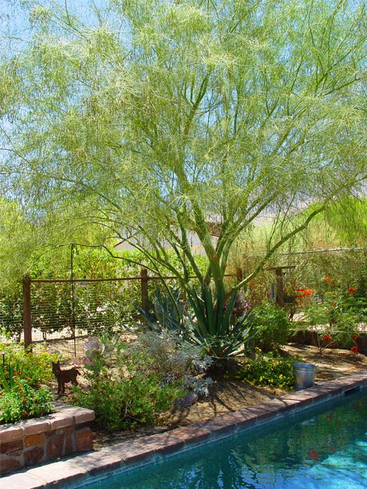 A Guide To Xeriscape Fundamentals Landscaping Network