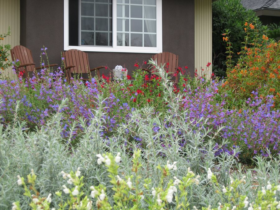 Plants for xeriscaping landscaping network for Garden design with native plants