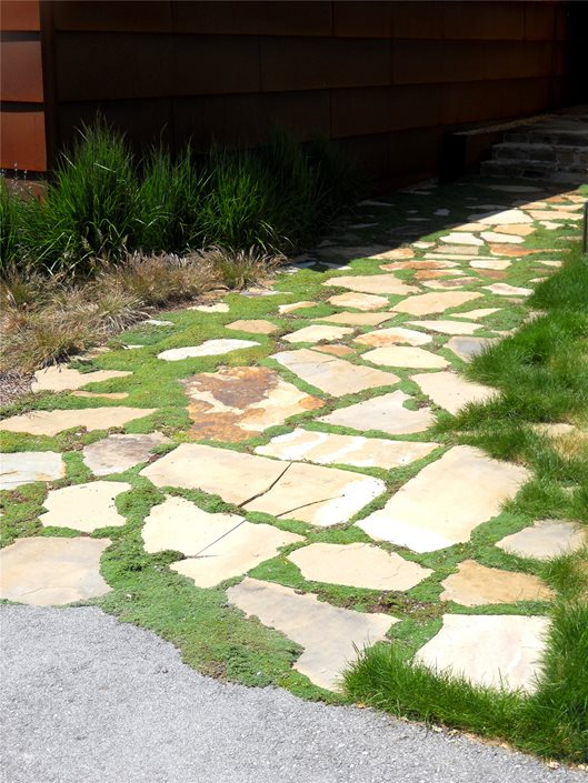 Flagstone Filler Plants : Flagstone joints landscaping network
