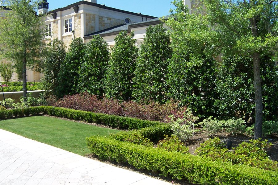 Planting a privacy screen landscaping network for Backyard privacy landscaping trees