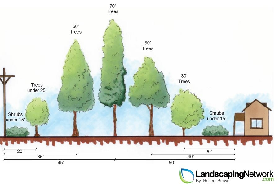 Landscape Planting Mistakes Landscaping Network