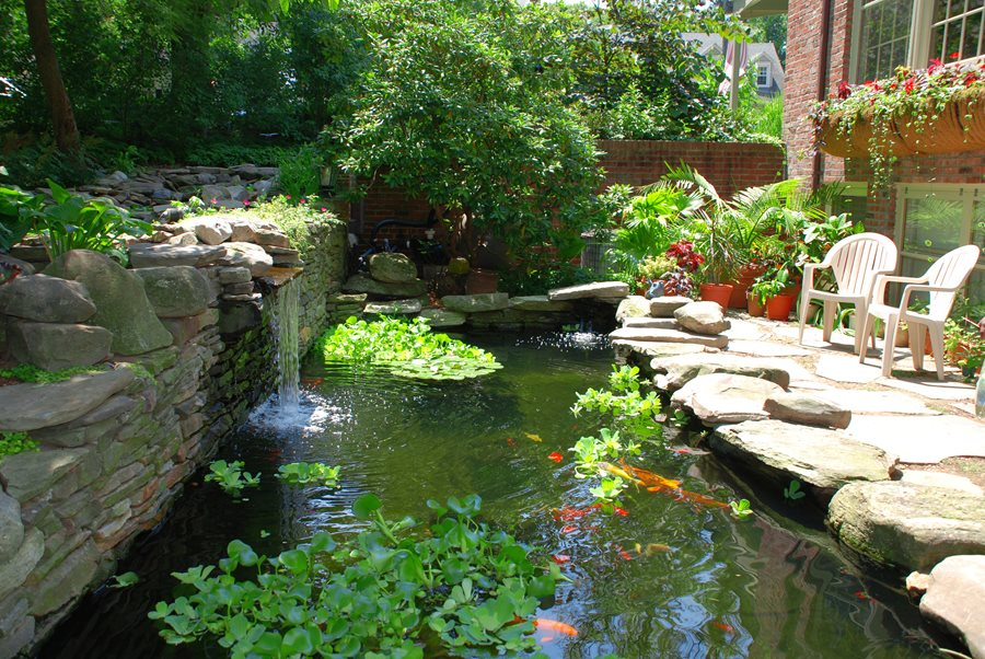 Koi pond design maintenance landscaping network for Backyard pond maintenance