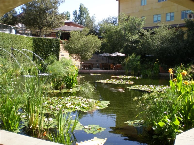 Koi fish pond design landscaping network for Contemporary koi pond design
