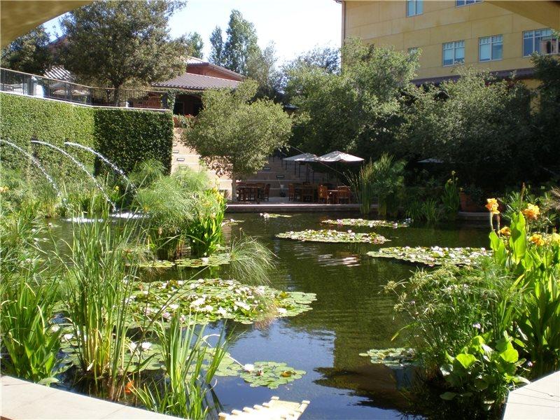 Small fish pond designs