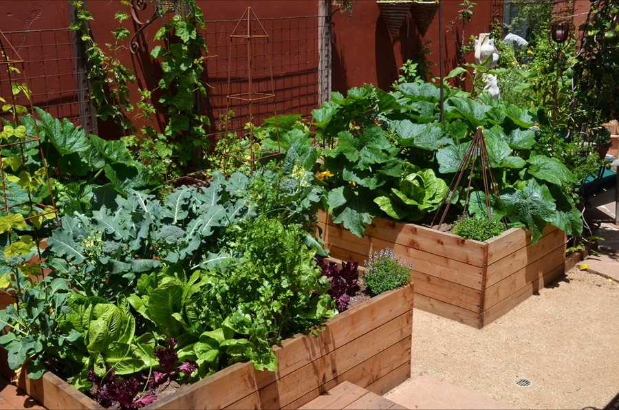 Small Vegetable Garden Ideas Pictures vegetable garden design ideas - landscaping network