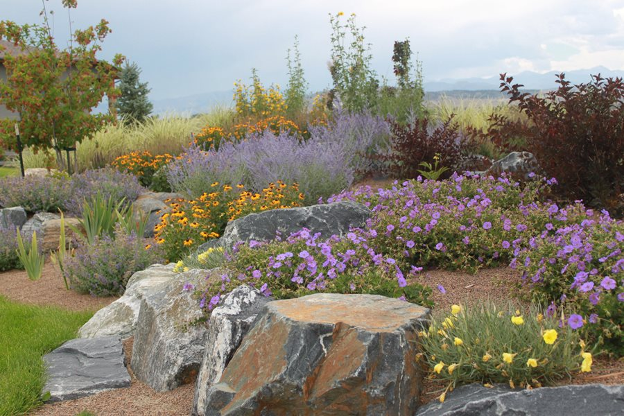 Hillside erosion control landscaping network for Garden design xeriscape