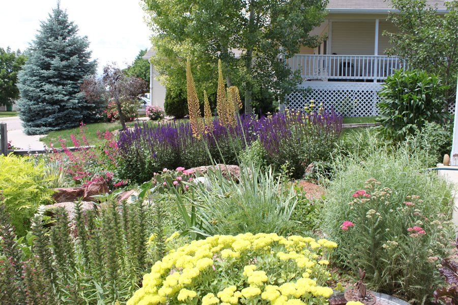 Native Landscaping Plants - Landscaping Network