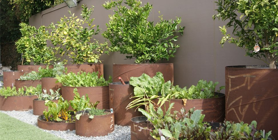 Vegetable Garden Idea Pipe Planters Z Freedman Landscape Design Venice, CA