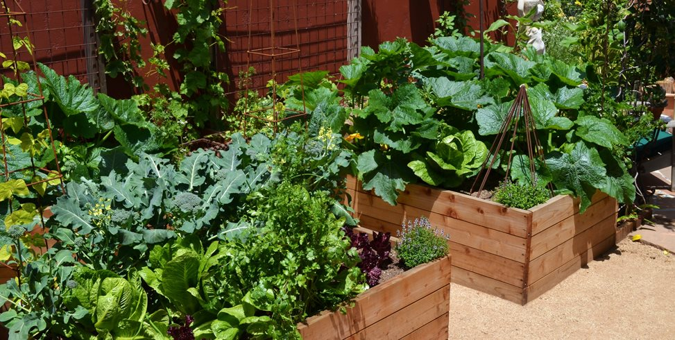 Vegetable Garden Design Ideas Landscaping Network - backyard vegetable garden design into