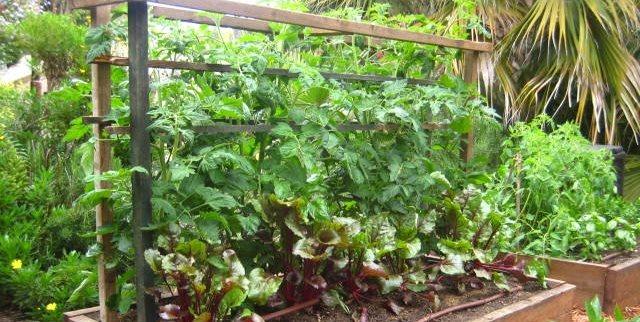 Raised Planters Landscaping Network Calimesa, CA