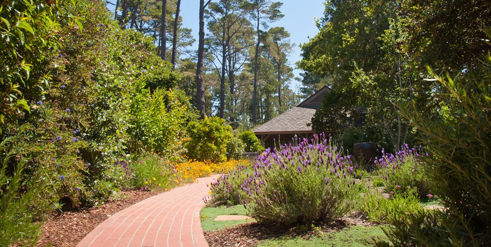 Red Brick Walkway, Blooming Lavender Ecotones Landscapes Cambria, CA