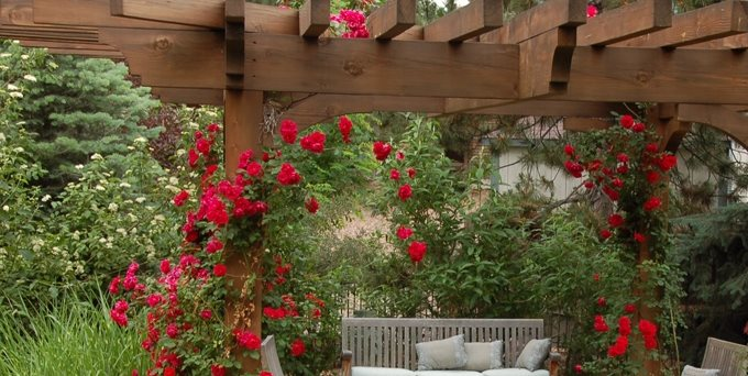 Patio Cover Climbing Roses Garden Design Designs By Sundown Englewood, CO