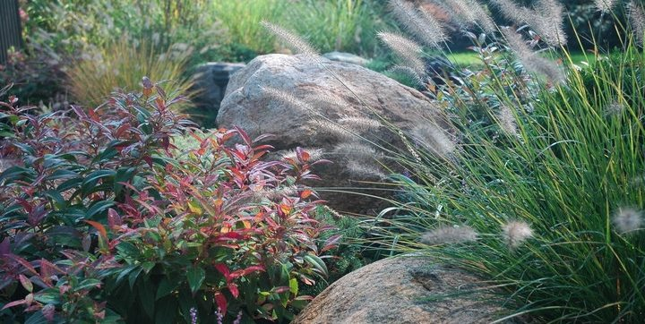 Boulders, Grasses Barry Block Landscape Design & Contracting East Moriches, NY