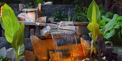 Canna Lilies, Koi Switzer's Nursery and Landscaping Northfield, MN