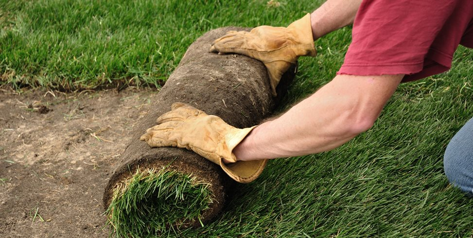 How To Lay Sod Landscaping Network Calimesa, CA