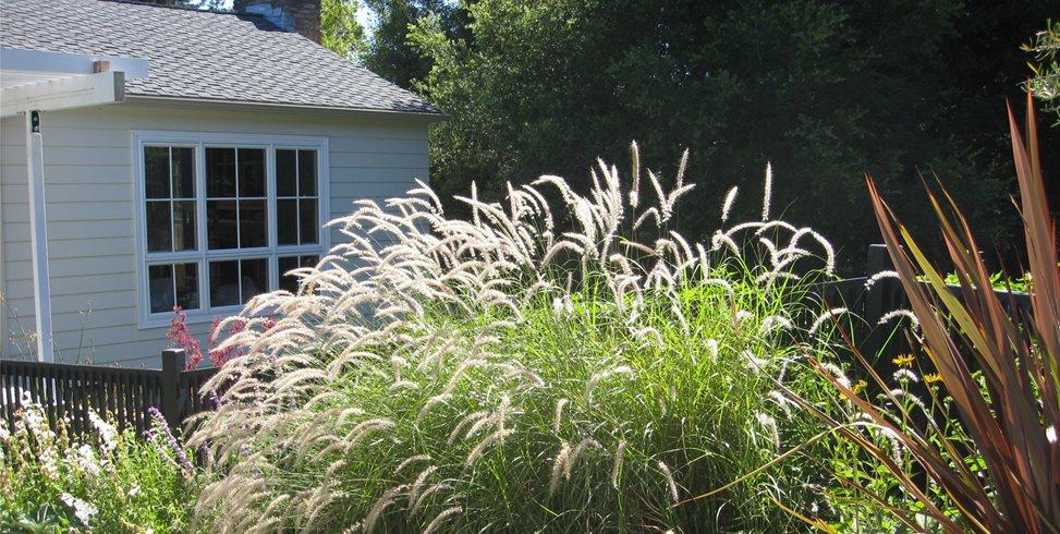 Planting Beds Dig Your Garden Landscape Design San Anselmo, CA