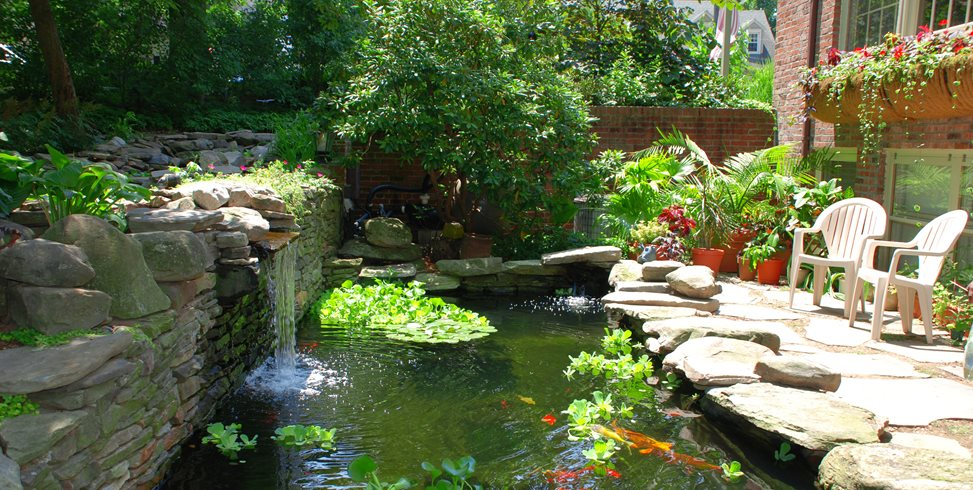 Koi pond design maintenance landscaping network for Fish pond maintenance